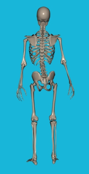 skeleton scoliosis